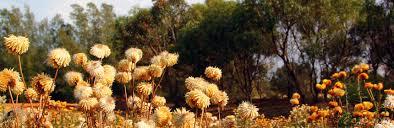 Pilyu Yarta Natural Burial Ground, Smithfield, South Australia